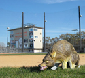 3D Coyote Deployed at Sports Field