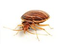 This is Why You Need the Bed Bug Alert!