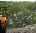 Bird X Critter Blaster PRO Landfill Application