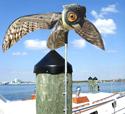 Bird X Prowler Owl Repels Seabirds