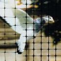 Premium Bird Netting Transit Installation