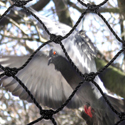 Premium Bird Netting Keeps Birds Out