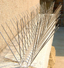 Bird X Stainless Steel Spike Needle Strips Installed on Building Ledge